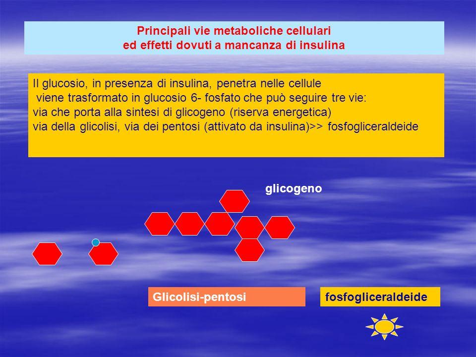 Principali vie metaboliche cellulari ed effetti dovuti a mancanza di insulina Il glucosio, in presenza di insulina, penetra nelle cellule viene trasfo