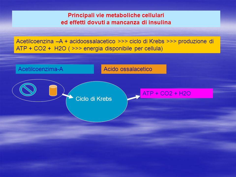 Principali vie metaboliche cellulari ed effetti dovuti a mancanza di insulina Acetilcoenzina –A + acidoossalacetico >>> ciclo di Krebs >>> produzione