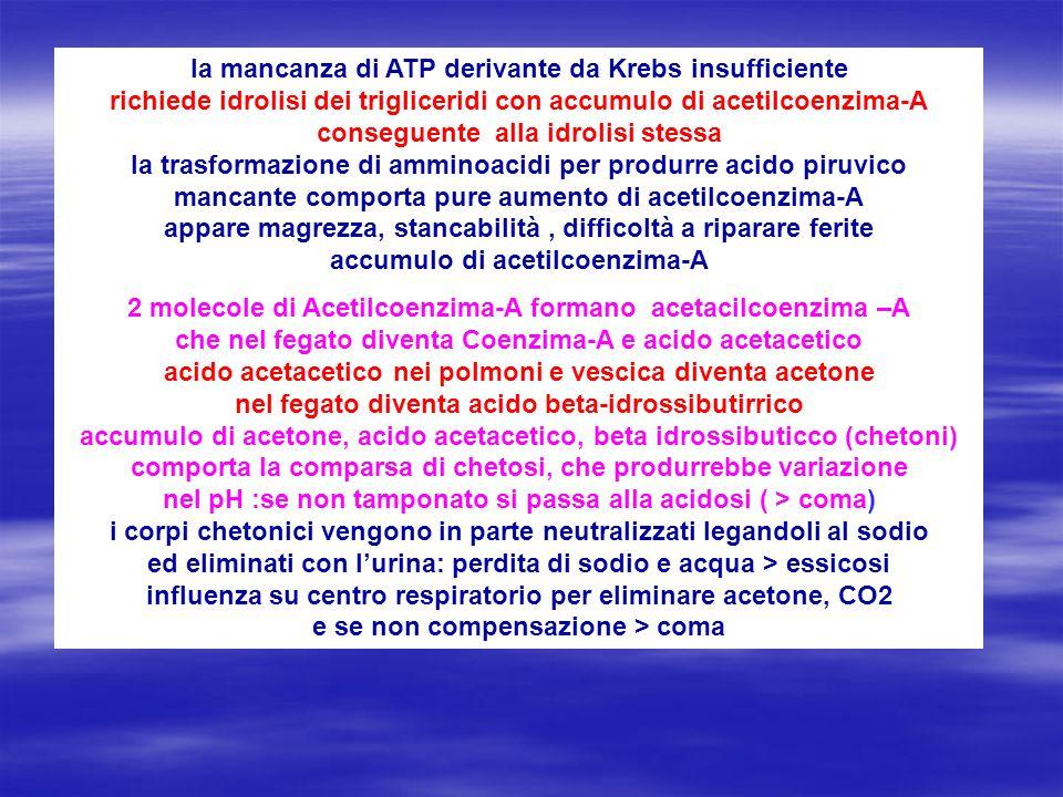 la mancanza di ATP derivante da Krebs insufficiente richiede idrolisi dei trigliceridi con accumulo di acetilcoenzima-A conseguente alla idrolisi stes