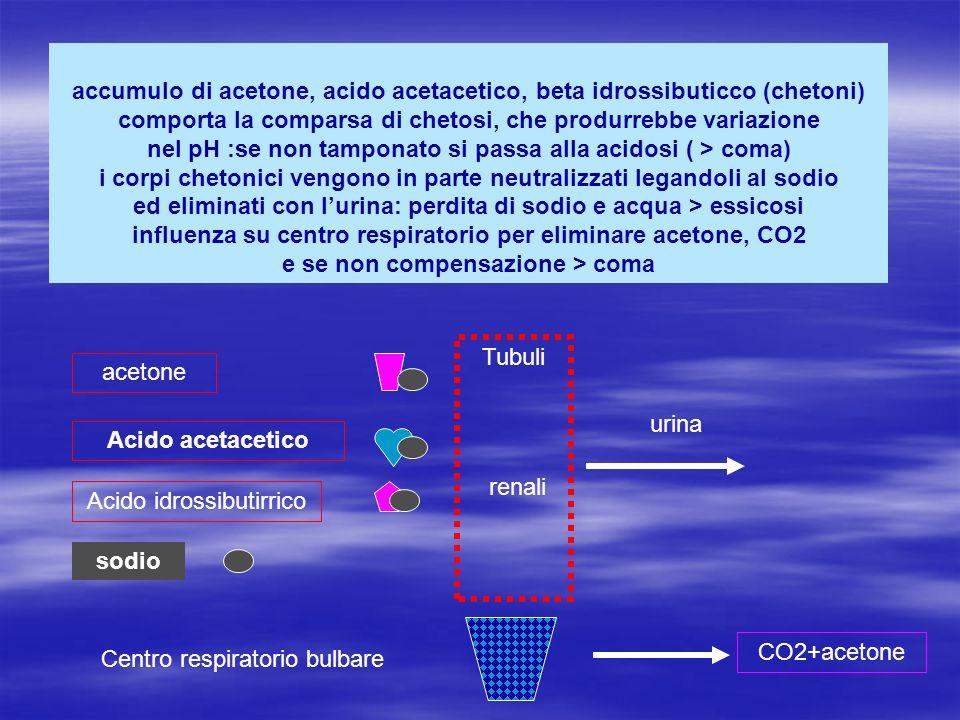 accumulo di acetone, acido acetacetico, beta idrossibuticco (chetoni) comporta la comparsa di chetosi, che produrrebbe variazione nel pH :se non tampo