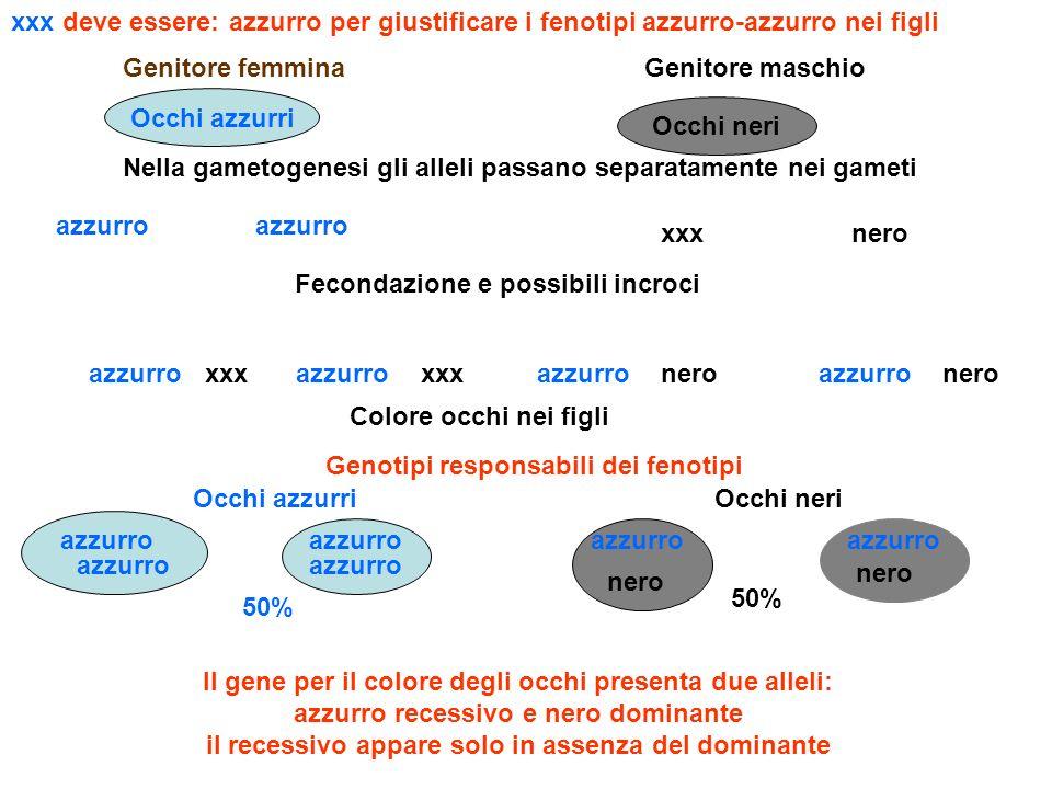 Genitore femminaGenitore maschio Occhi azzurri Occhi neri Il gene per il colore degli occhi presenta due alleli: azzurro recessivo e nero dominante il recessivo appare solo in assenza del dominante Nella gametogenesi gli alleli passano separatamente nei gameti azzurro xxxnero Fecondazione e possibili incroci azzurroneroazzurro neroxxx azzurro Colore occhi nei figli Occhi azzurriOcchi neri 50% azzurro nero azzurro nero Genotipi responsabili dei fenotipi azzurro xxx deve essere: azzurro per giustificare i fenotipi azzurro-azzurro nei figli