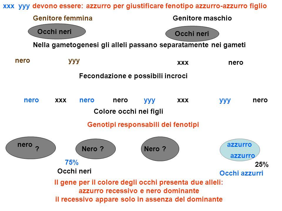 Genitore femminaGenitore maschio BX Il gene per il gruppo sanguigno presenta tre alleli A e B dominanti, 0 recessivo Nella gametogenesi gli alleli passano separatamente nei gameti AX XB Fecondazione e possibili incroci AXXBXXA gruppi sanguigni nei figli X devono essere 0 per giustificare fenotipo gruppo 0 nel figlio AX B Genotipi responsabili dei fenotipi AX 25% ABBX00 25%