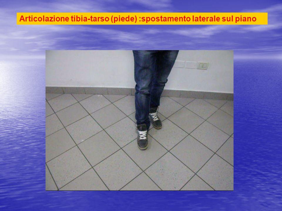 Articolazione tibia-tarso (piede) :spostamento laterale sul piano