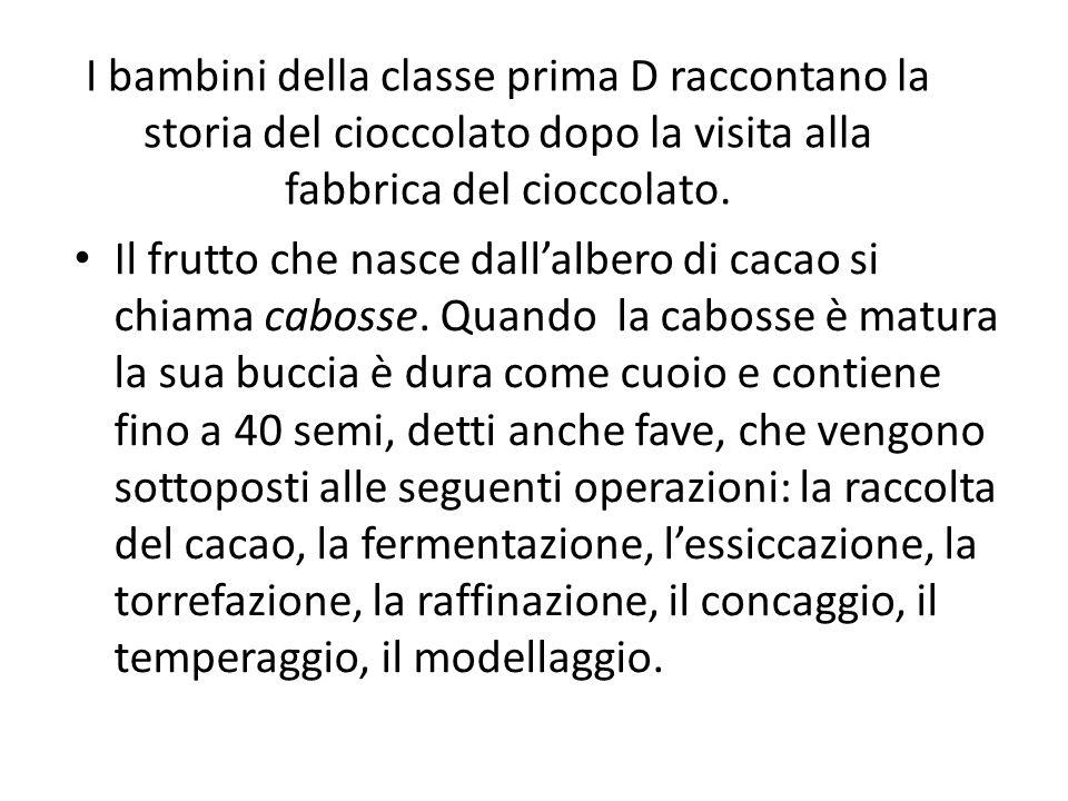 I bambini della classe prima D raccontano la storia del cioccolato dopo la visita alla fabbrica del cioccolato. Il frutto che nasce dallalbero di caca