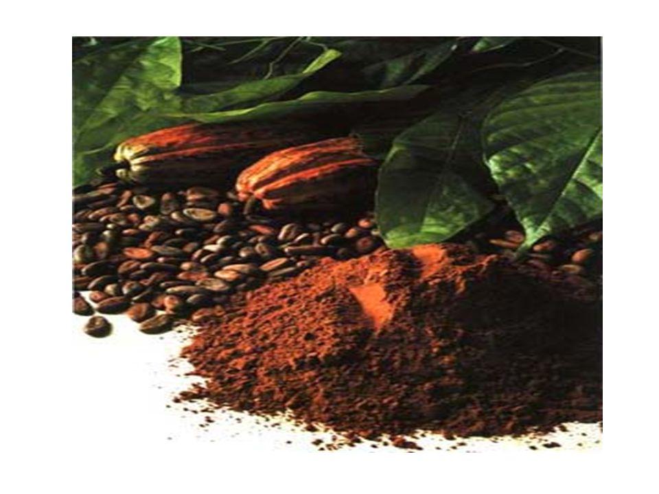 I frutti appena raccolti hanno un sapore molto amaro e si lasciano fermentare a lungo per facilitare il distacco della polpa dal guscio.