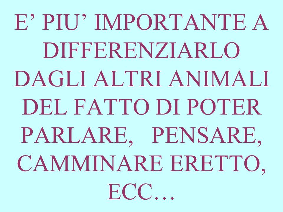 E PIU IMPORTANTE A DIFFERENZIARLO DAGLI ALTRI ANIMALI DEL FATTO DI POTER PARLARE, PENSARE, CAMMINARE ERETTO, ECC…