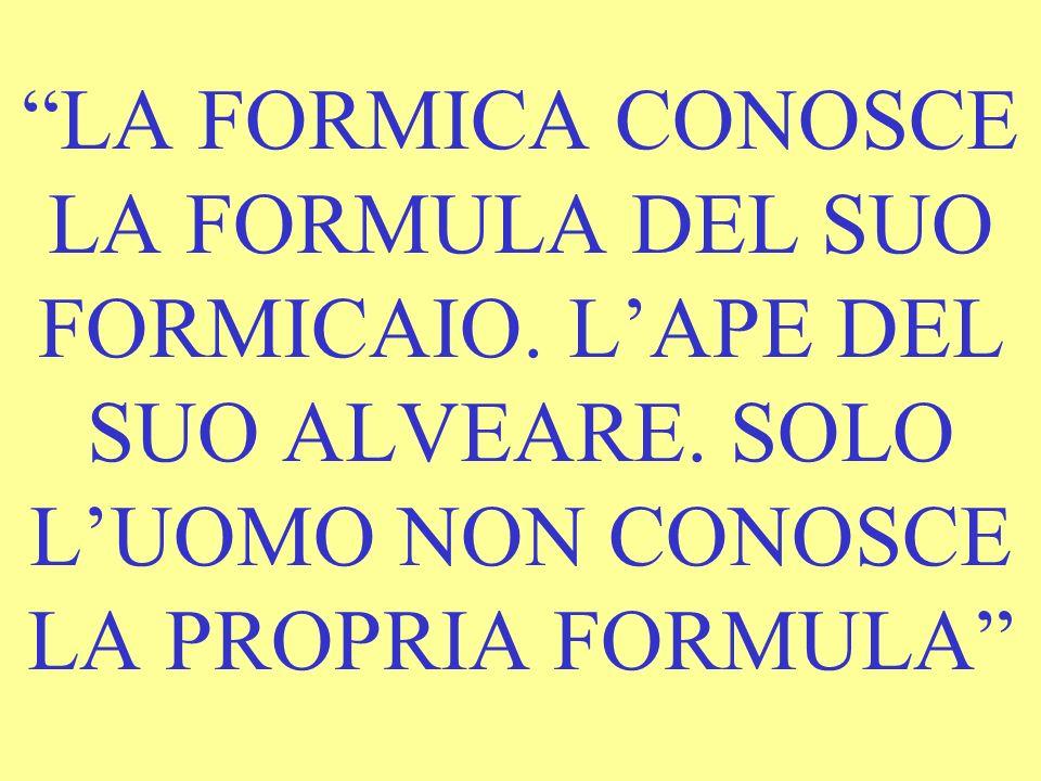 LA FORMICA CONOSCE LA FORMULA DEL SUO FORMICAIO.LAPE DEL SUO ALVEARE.