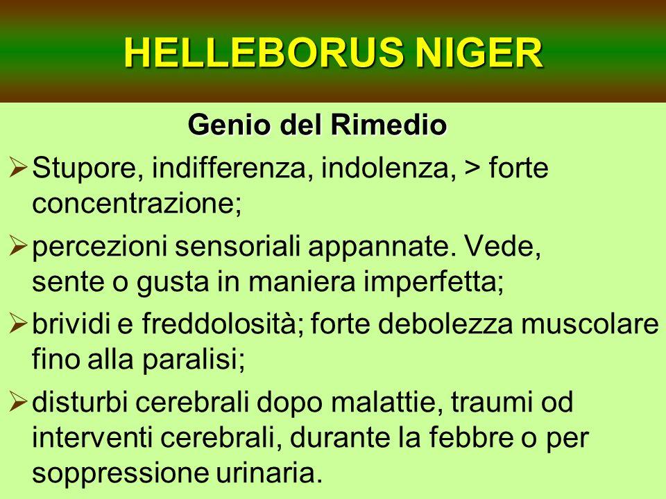 HELLEBORUS NIGER Genio del Rimedio Stupore, indifferenza, indolenza, > forte concentrazione; percezioni sensoriali appannate. Vede, sente o gusta in m