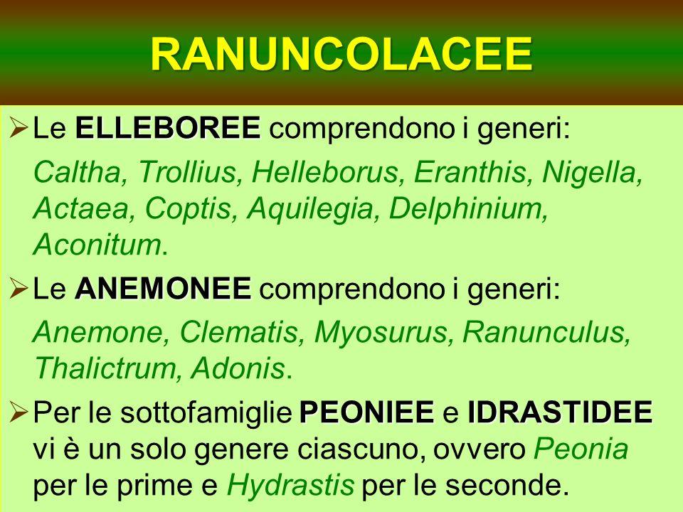 RANUNCOLACEE ELLEBOREE Le ELLEBOREE comprendono i generi: Caltha, Trollius, Helleborus, Eranthis, Nigella, Actaea, Coptis, Aquilegia, Delphinium, Acon