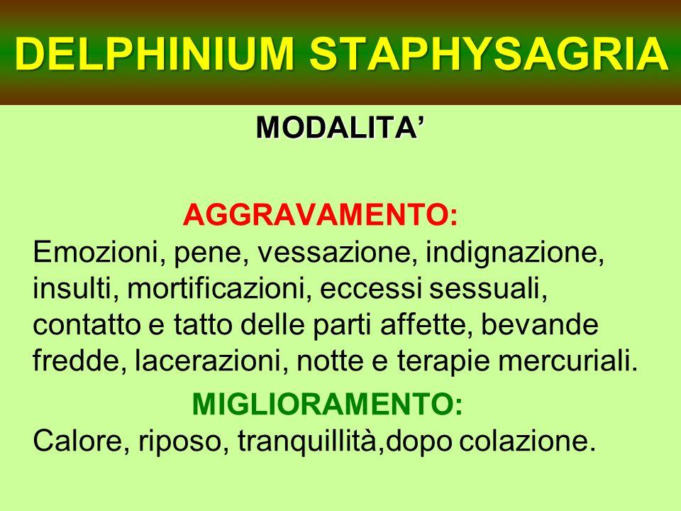 DELPHINIUM STAPHYSAGRIA MODALITA AGGRAVAMENTO: Emozioni, pene, vessazione, indignazione, insulti, mortificazioni, eccessi sessuali, contatto e tatto d