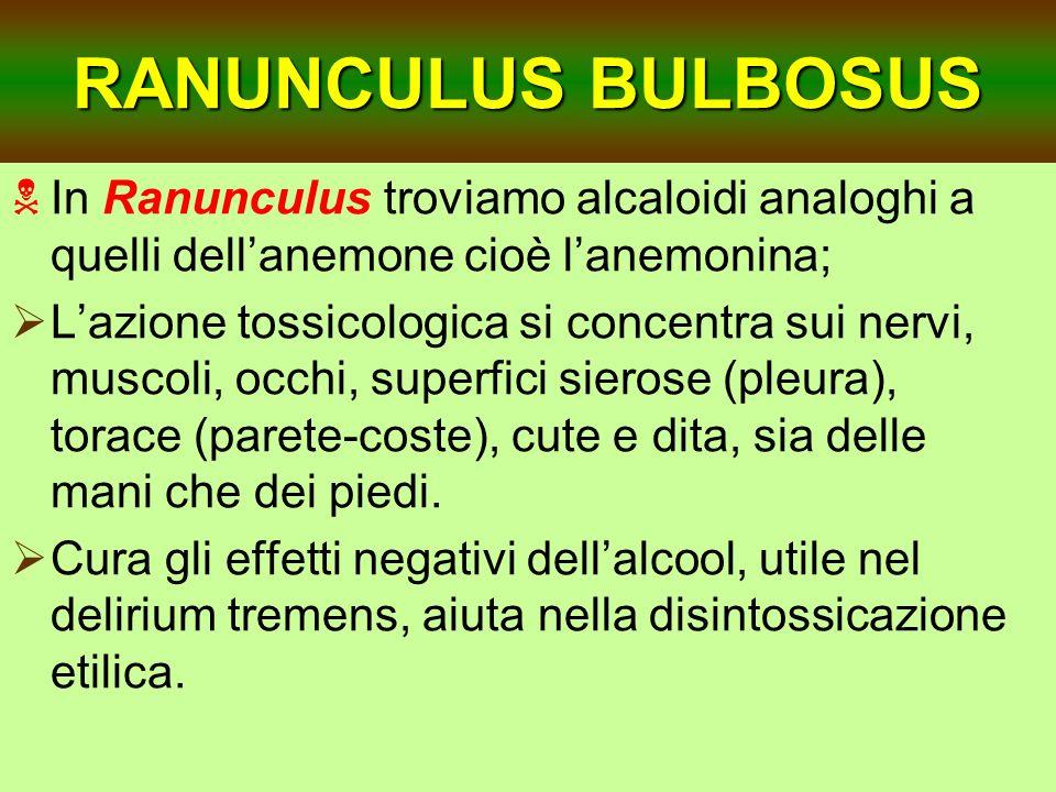 RANUNCULUS BULBOSUS In Ranunculus troviamo alcaloidi analoghi a quelli dellanemone cioè lanemonina; Lazione tossicologica si concentra sui nervi, musc