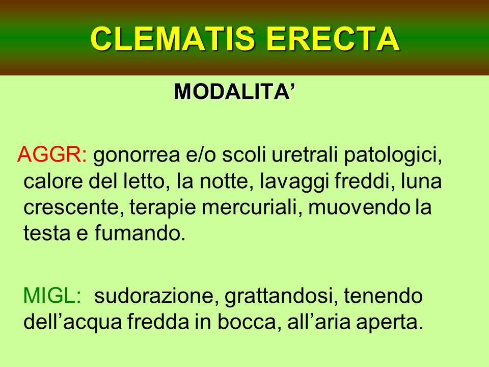CLEMATIS ERECTA MODALITA MODALITA AGGR: gonorrea e/o scoli uretrali patologici, calore del letto, la notte, lavaggi freddi, luna crescente, terapie me