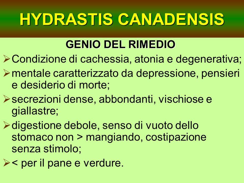 HYDRASTIS CANADENSIS GENIO DEL RIMEDIO Condizione di cachessia, atonia e degenerativa; mentale caratterizzato da depressione, pensieri e desiderio di