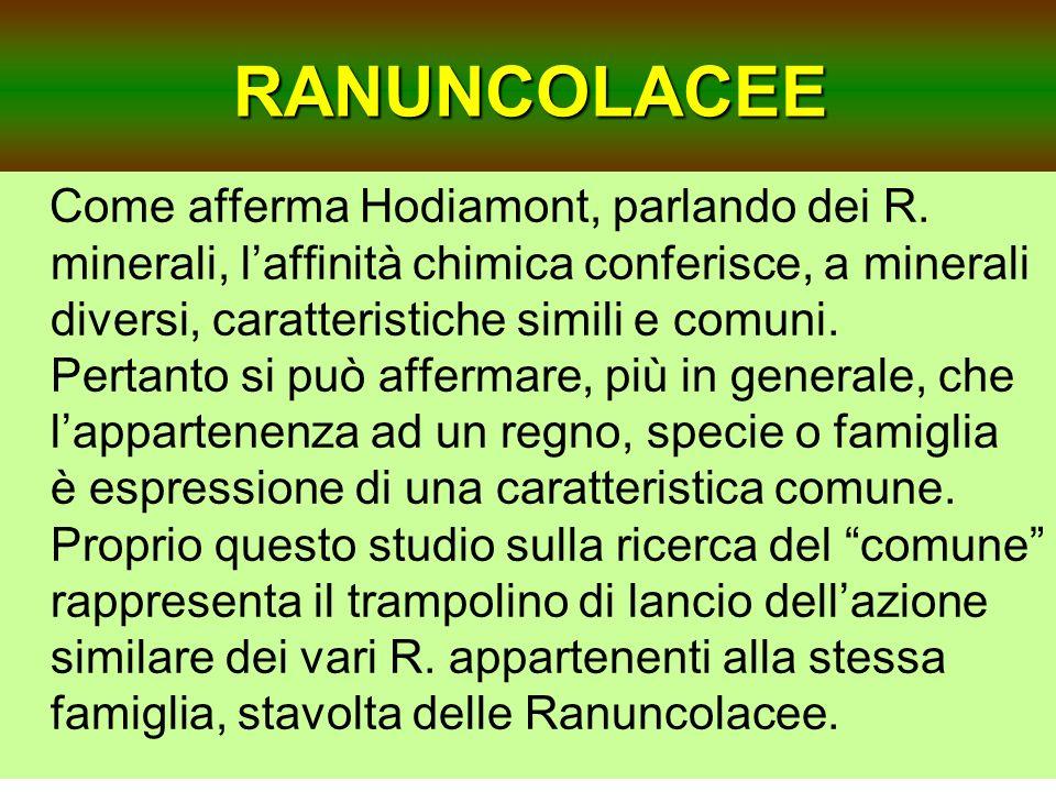 RANUNCOLACEE Come afferma Hodiamont, parlando dei R. minerali, laffinità chimica conferisce, a minerali diversi, caratteristiche simili e comuni. Pert