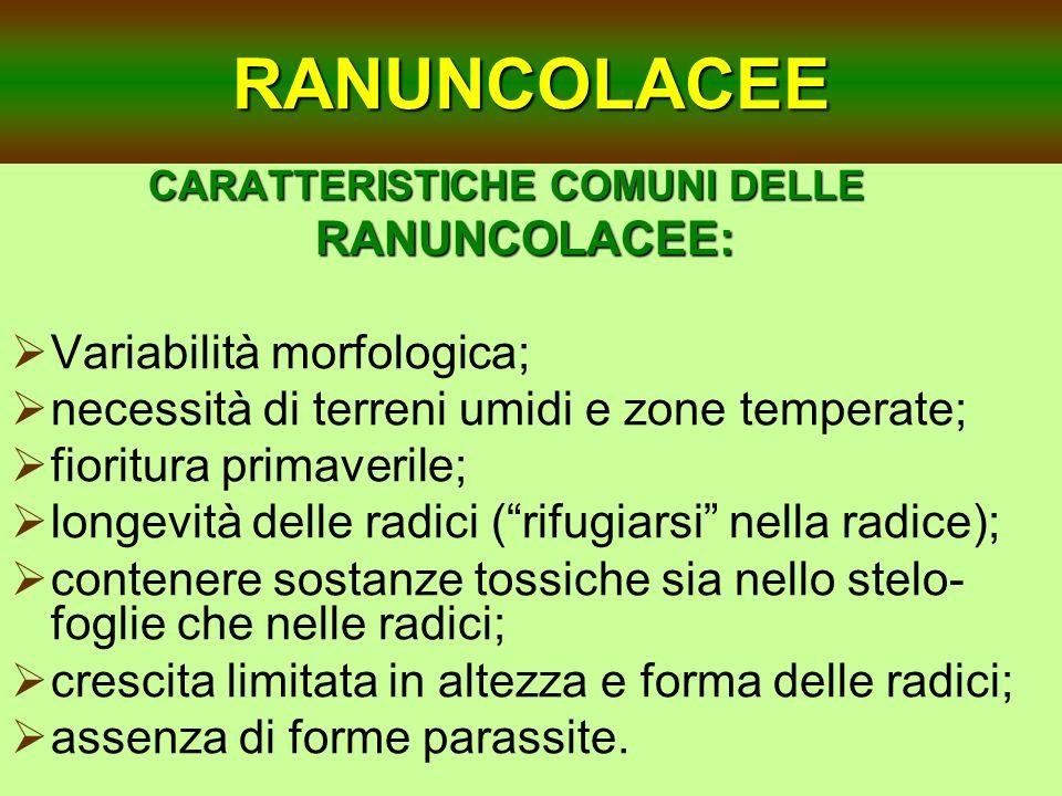 RANUNCOLACEE CARATTERISTICHE COMUNI DELLE RANUNCOLACEE: RANUNCOLACEE: Variabilità morfologica; necessità di terreni umidi e zone temperate; fioritura
