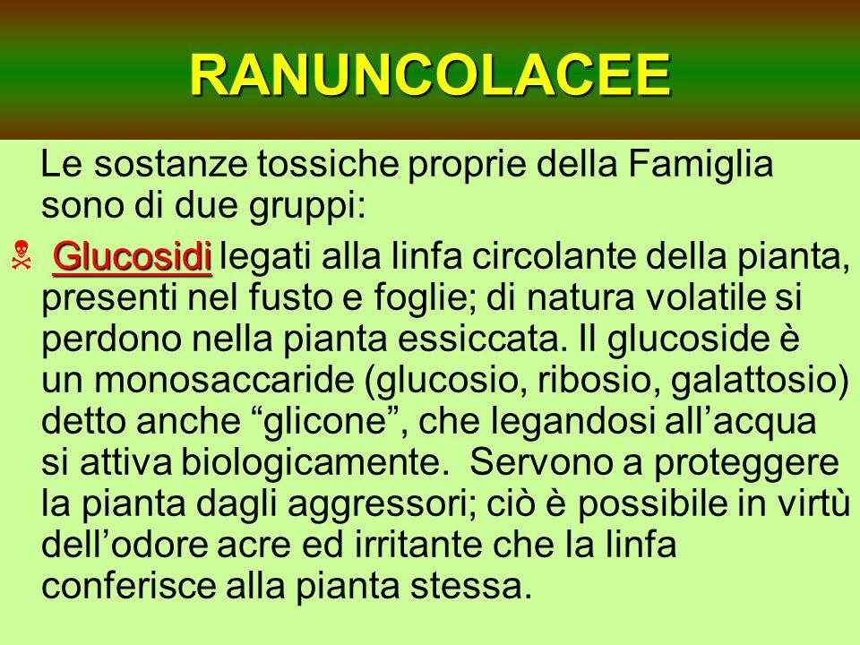 RANUNCOLACEE Le sostanze tossiche proprie della Famiglia sono di due gruppi: Glucosidi Glucosidi legati alla linfa circolante della pianta, presenti n