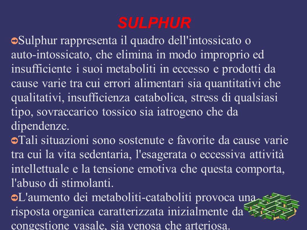 SULPHUR Sulphur rappresenta il quadro dell'intossicato o auto-intossicato, che elimina in modo improprio ed insufficiente i suoi metaboliti in eccesso