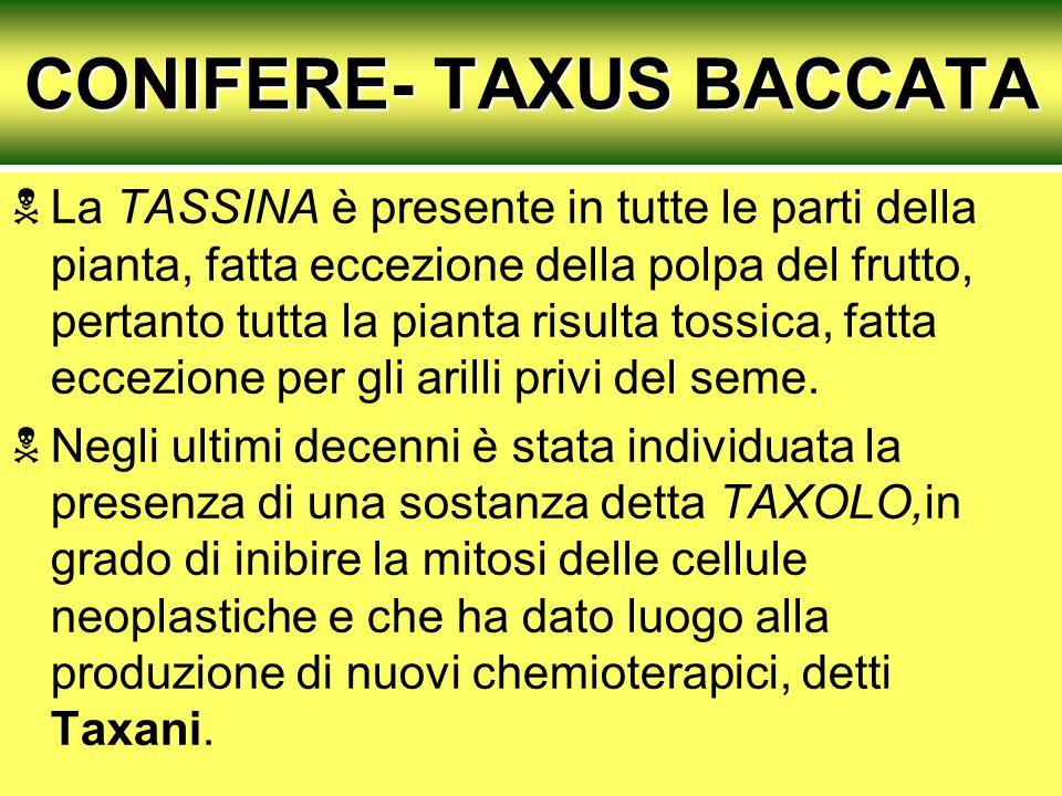 CONIFERE- TAXUS BACCATA La TASSINA è presente in tutte le parti della pianta, fatta eccezione della polpa del frutto, pertanto tutta la pianta risulta tossica, fatta eccezione per gli arilli privi del seme.
