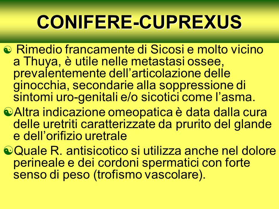 CONIFERE-CUPREXUS Rimedio francamente di Sicosi e molto vicino a Thuya, è utile nelle metastasi ossee, prevalentemente dellarticolazione delle ginocchia, secondarie alla soppressione di sintomi uro-genitali e/o sicotici come lasma.