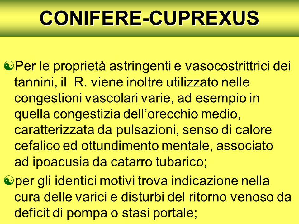 CONIFERE-CUPREXUS Per le proprietà astringenti e vasocostrittrici dei tannini, il R. viene inoltre utilizzato nelle congestioni vascolari varie, ad es
