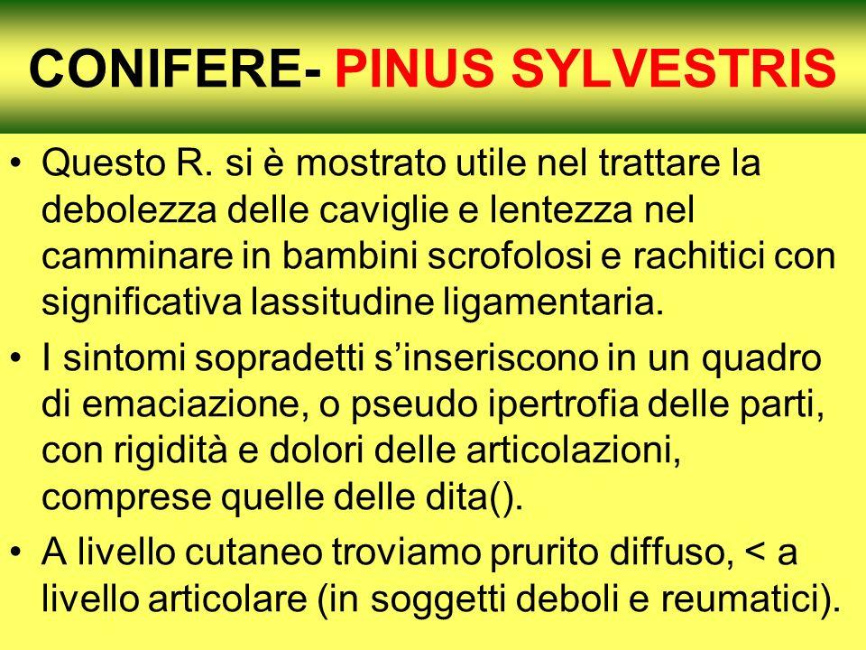 CONIFERE- PINUS SYLVESTRIS Questo R.