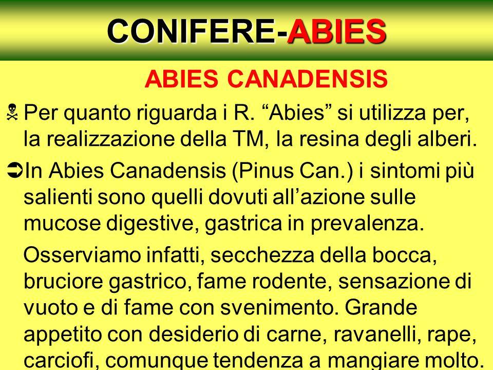 CONIFERE-ABIES ABIES CANADENSIS Per quanto riguarda i R. Abies si utilizza per, la realizzazione della TM, la resina degli alberi. In Abies Canadensis