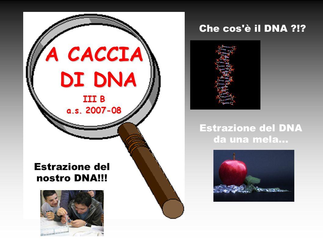 A CACCIA DI DNA DI DNA III B a.s. 2007-08 Che cos'è il DNA ?!? Estrazione del DNA da una mela... Estrazione del nostro DNA!!!