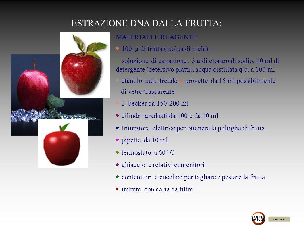 MATERIALI E REAGENTI: 100 g di frutta ( polpa di mela) soluzione di estrazione : 3 g di cloruro di sodio, 10 ml di detergente (detersivo piatti), acqu