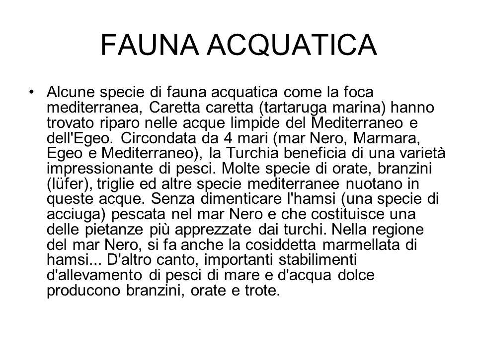 FAUNA ACQUATICA Alcune specie di fauna acquatica come la foca mediterranea, Caretta caretta (tartaruga marina) hanno trovato riparo nelle acque limpid