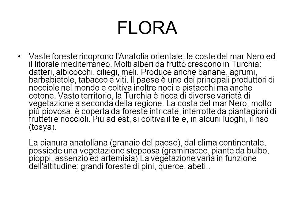 FLORA Vaste foreste ricoprono l'Anatolia orientale, le coste del mar Nero ed il litorale mediterraneo. Molti alberi da frutto crescono in Turchia: dat