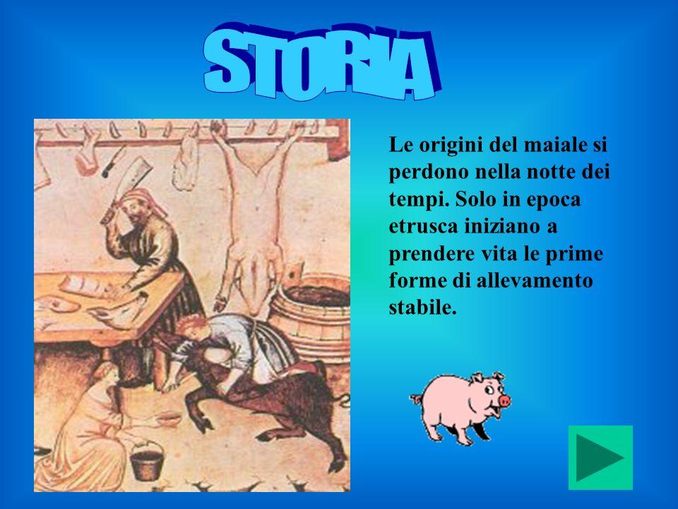 Le origini del maiale si perdono nella notte dei tempi. Solo in epoca etrusca iniziano a prendere vita le prime forme di allevamento stabile.