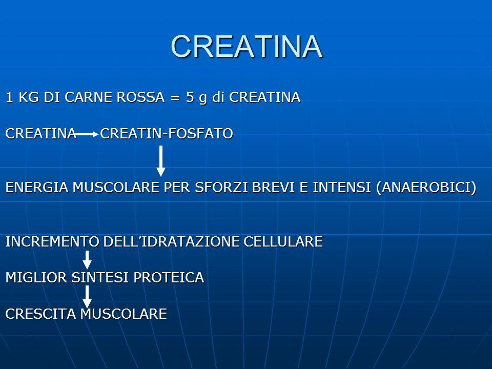 CREATINA 1 KG DI CARNE ROSSA = 5 g di CREATINA CREATINA CREATIN-FOSFATO ENERGIA MUSCOLARE PER SFORZI BREVI E INTENSI (ANAEROBICI) INCREMENTO DELLIDRAT
