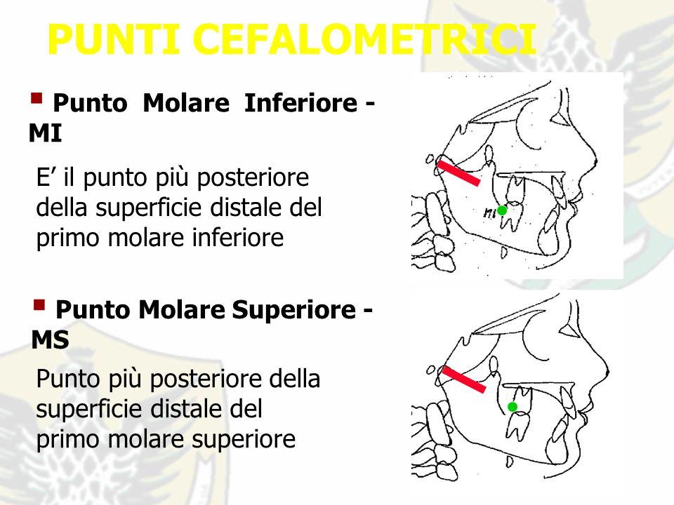 PUNTI CEFALOMETRICI Punto Molare Inferiore - MI E il punto più posteriore della superficie distale del primo molare inferiore Punto Molare Superiore - MS Punto più posteriore della superficie distale del primo molare superiore