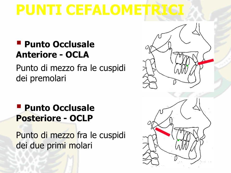 PUNTI CEFALOMETRICI Punto Occlusale Anteriore - OCLA Punto di mezzo fra le cuspidi dei premolari Punto Occlusale Posteriore - OCLP Punto di mezzo fra le cuspidi dei due primi molari