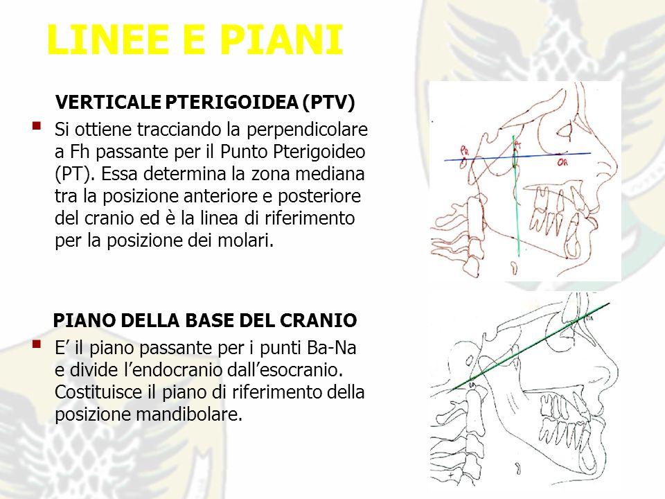 LINEE E PIANI VERTICALE PTERIGOIDEA (PTV) Si ottiene tracciando la perpendicolare a Fh passante per il Punto Pterigoideo (PT).