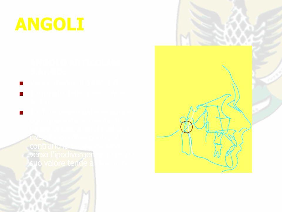 ANGOLI ANGOLO ARTICOLARE S.Ar.GO: Valore medio di 143° ± 6 °.