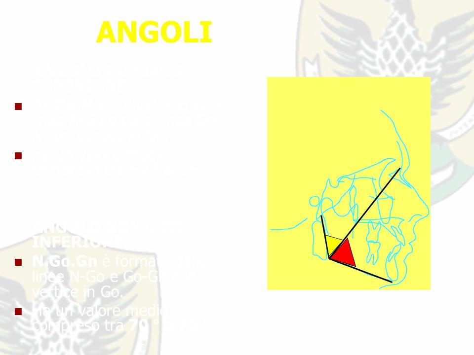 ANGOLI ANGOLO GONIACO SUPERIORE : Ar.Go.N è individuato dalla linea ArGo e dalla linea Go- N con vertice in Go.