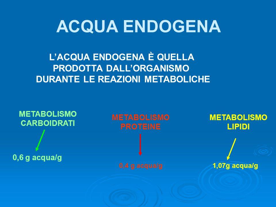 LACQUA ENDOGENA È QUELLA PRODOTTA DALLORGANISMO DURANTE LE REAZIONI METABOLICHE METABOLISMO CARBOIDRATI 0,6 g acqua/g METABOLISMO PROTEINE METABOLISMO