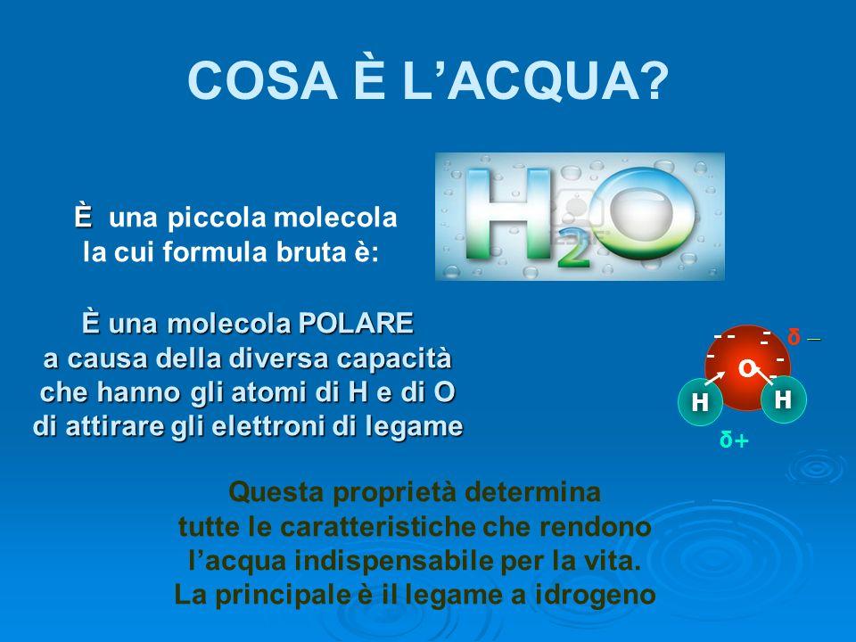 COSA È LACQUA? O H H - - - -- - δ δ+δ+ - È È una piccola molecola la cui formula bruta è: È una molecola POLARE a causa della diversa capacità che han