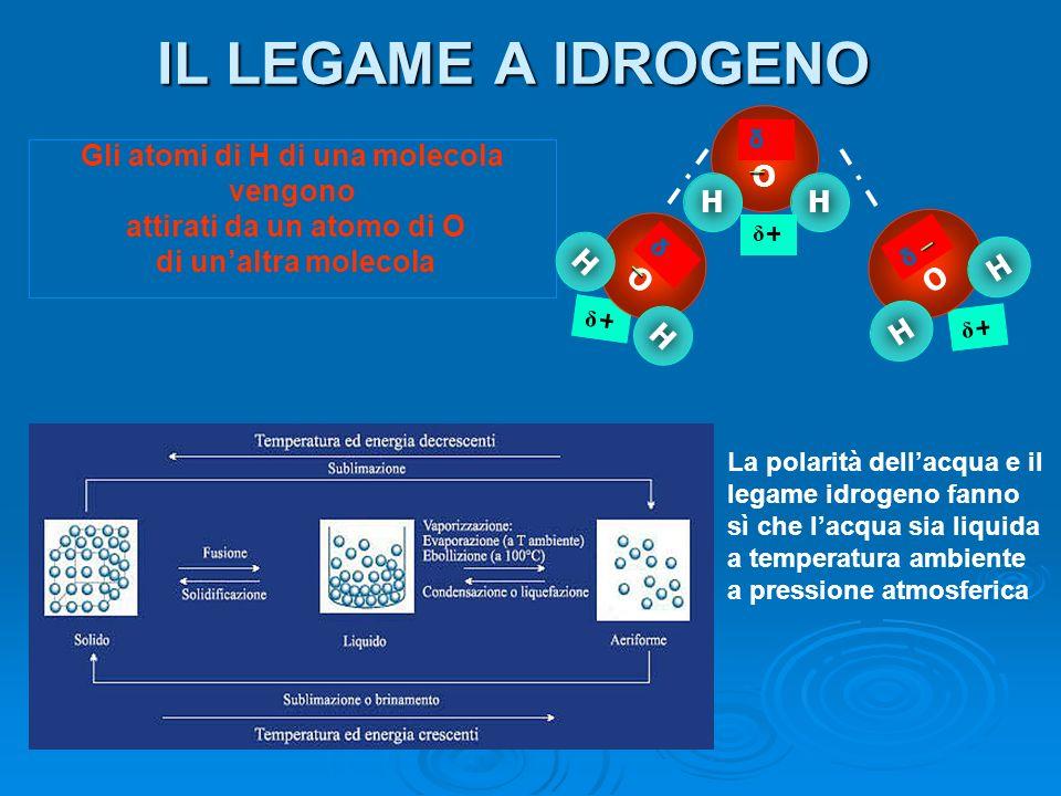 IL LEGAME A IDROGENO Gli atomi di H di una molecola vengono attirati da un atomo di O di unaltra molecola O HH δ δ + O H H δ δ + δ + O H H δ La polari