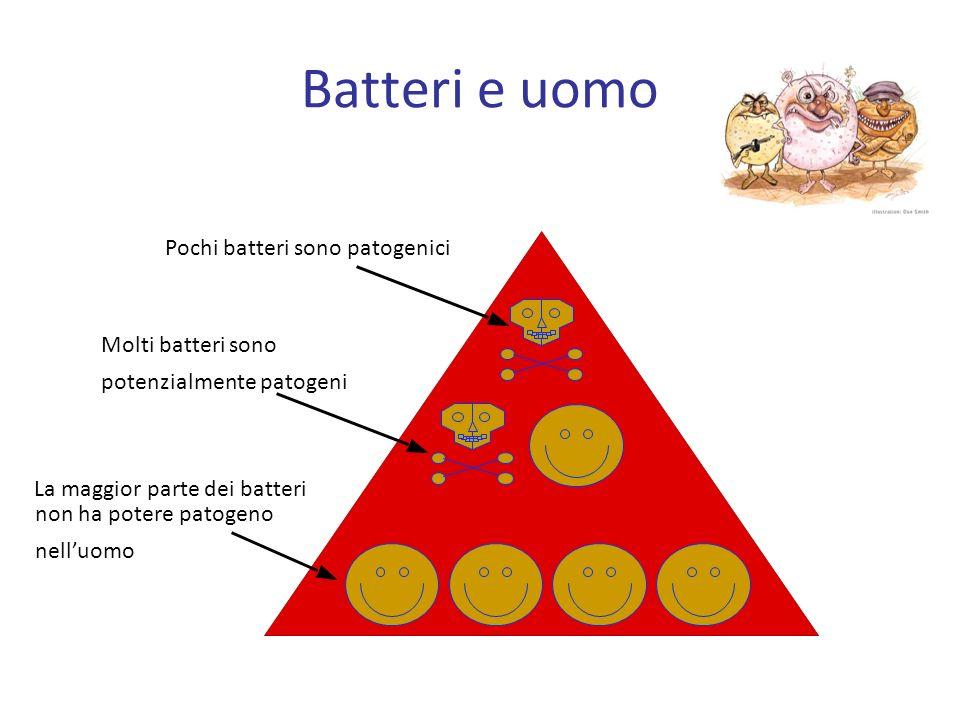 Flora normale FLORA BATTERICA INTESTINALE Nellintestino umano albergano infatti circa 400 specie batteriche.