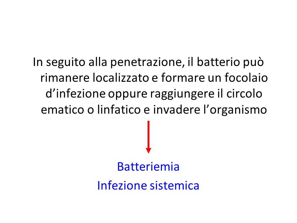 In seguito alla penetrazione, il batterio può rimanere localizzato e formare un focolaio dinfezione oppure raggiungere il circolo ematico o linfatico