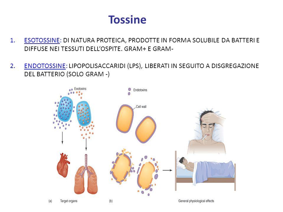 Tossine 1.ESOTOSSINE: DI NATURA PROTEICA, PRODOTTE IN FORMA SOLUBILE DA BATTERI E DIFFUSE NEI TESSUTI DELLOSPITE. GRAM+ E GRAM- 2.ENDOTOSSINE: LIPOPOL