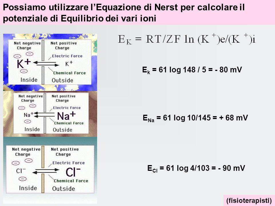 Il potenziale di membrana e il passaggio delle sostanze attraverso la membrana di una qualsiasi cellula N. B. scende ad onda quadra!!!!