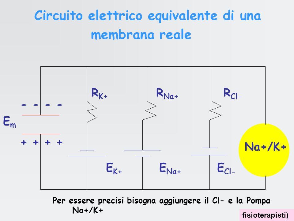 Tra linterno e lesterno di una cellula esiste una elettroneutralità sostanziale ovvero una minima differenze nella distribuzione delle cariche. È graz