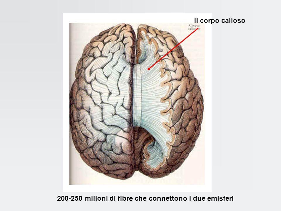 Il cervello è una fitta rete di comunicazione