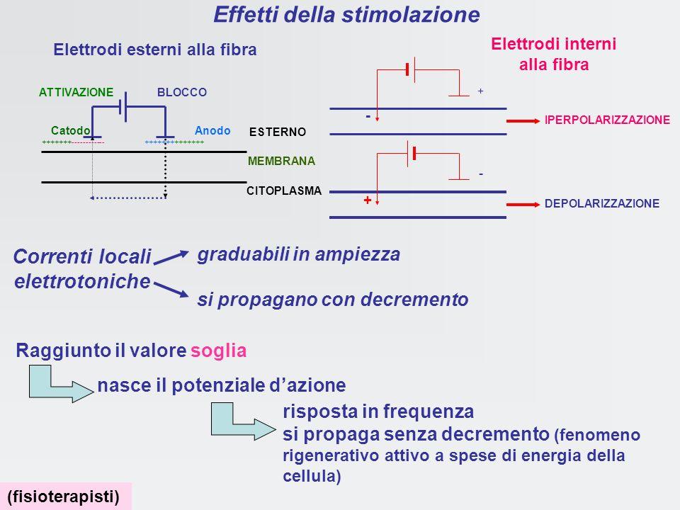 Potenziale dazione proprietà: 2) refrattarietà Le barriere dei canali del Na +, sono ritornate nella posizione di partenza, ma poichè i canali del K +