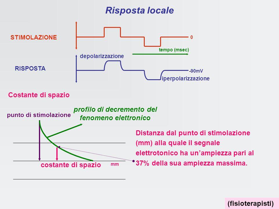 Effetti della stimolazione Correnti locali elettrotoniche graduabili in ampiezza si propagano con decremento risposta in frequenza si propaga senza de
