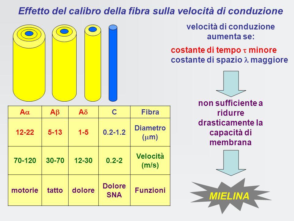 Parametri fisici che determinano la velocità di conduzione C = Q / V V = RI = RQ / t C = Qt / RQ RC = membrana cellulare: condensatore (superficie iso