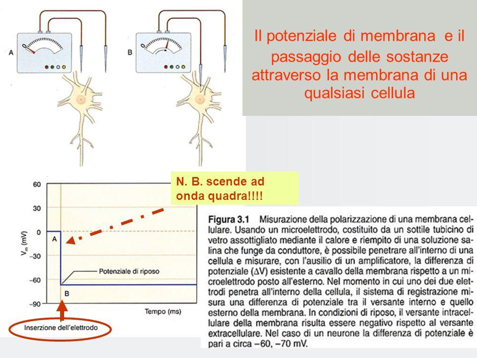 Eccitabilità cellulare: movimento di ioni attraverso canali movimento degli ioni porta il potenziale di membrana a valori più negativi: iperpolarizzazione (ingresso Cl - ) potenziale di membrana meno negativo: depolarizzazione ingresso di ioni Na + potenziale di membrana torna al valore di riposo ripolarizzazione (uscita di ioni K + )